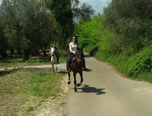Horse riding at Don Totu